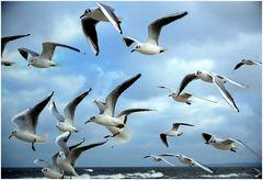 V.V. = viele vögel