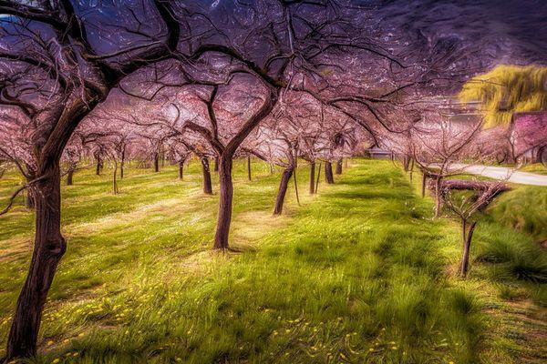 Aprikosenbaum Fotos Bilder Auf Fotocommunity