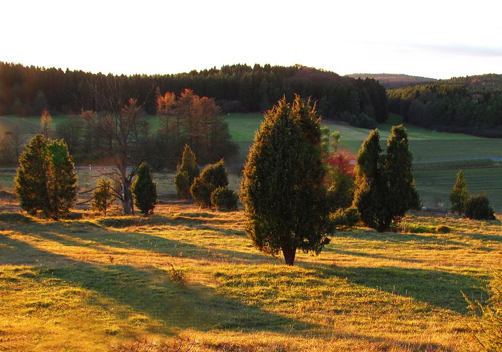 Wacholderheide im Herbst