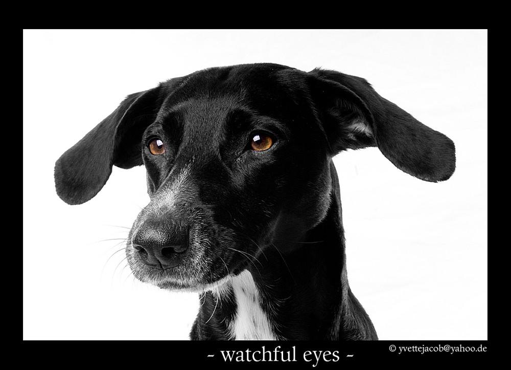 wachsame Augen