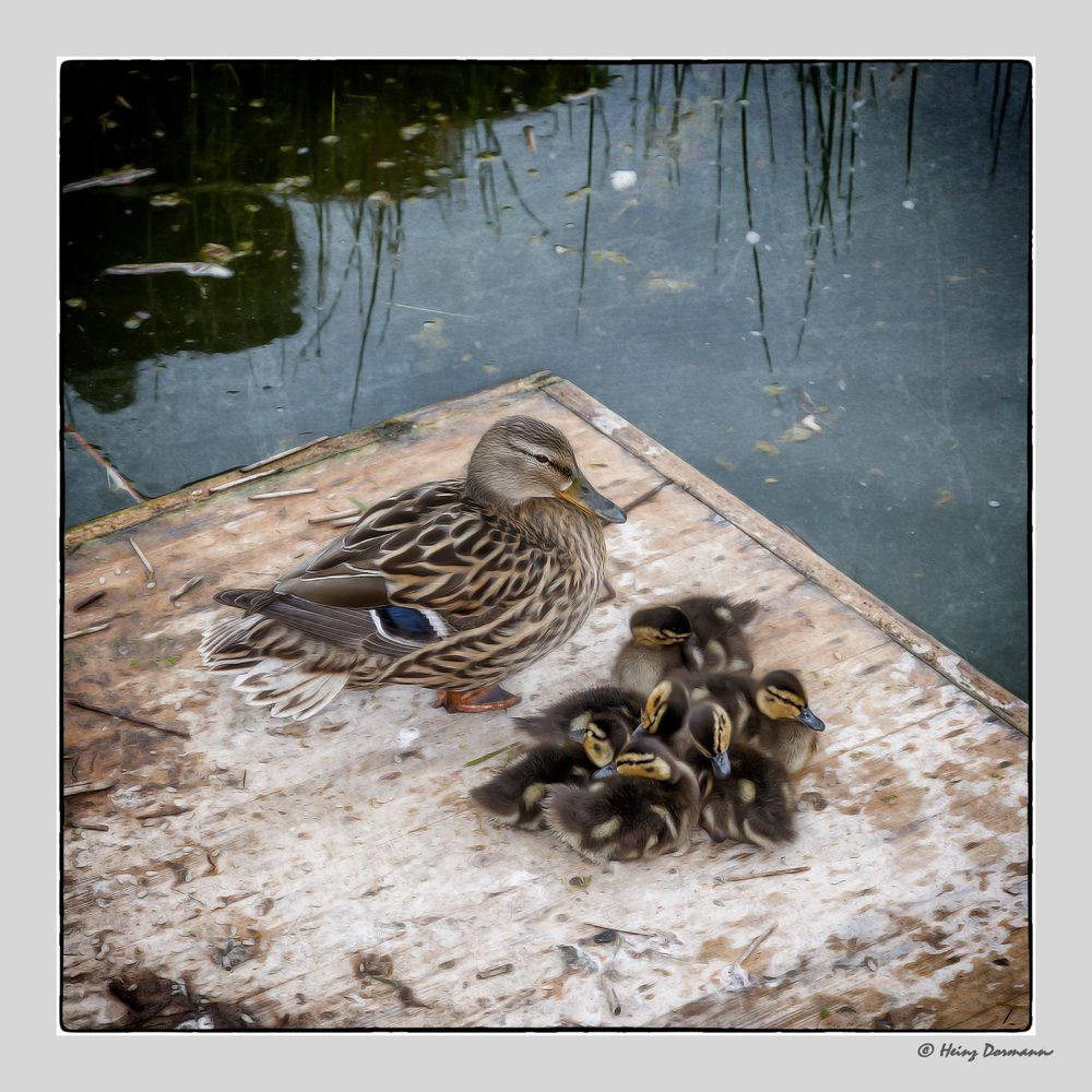 Wachsame Mama mit Babys..