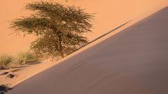 Wachstum im Sand1