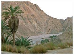 Wadi Gnai / Sinai