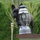 Wächter der Lampe