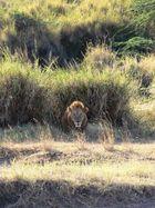Wächter der Serengeti