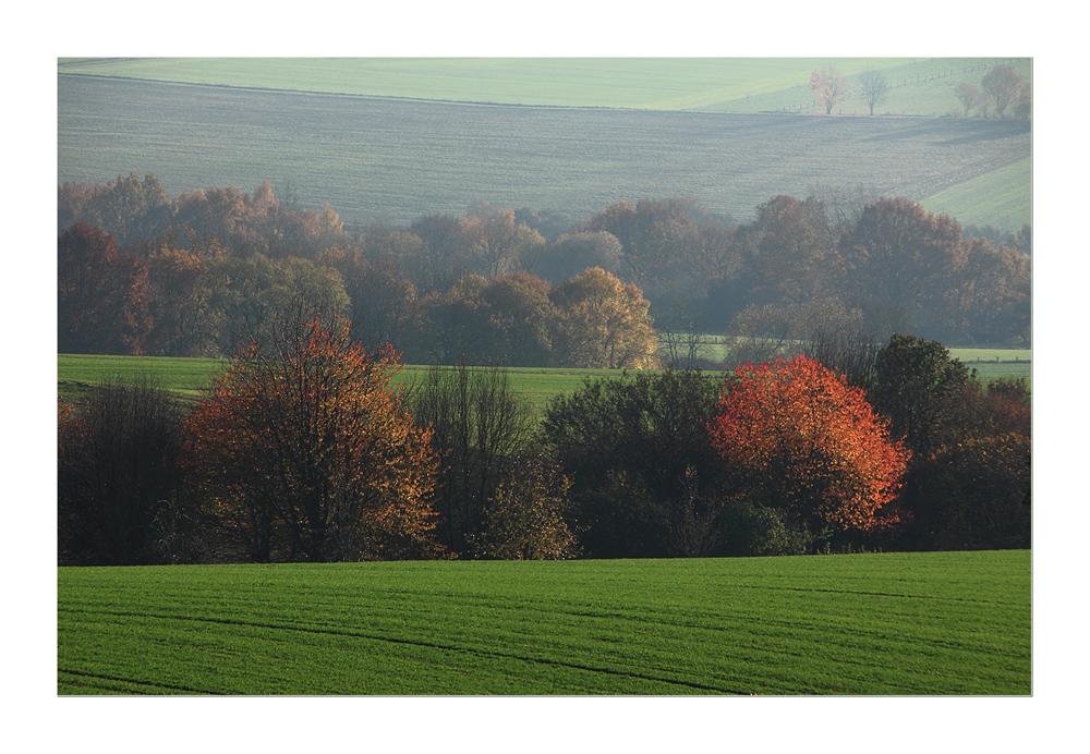 Während das Herbstlaub in letzter Glut aufleuchtet...