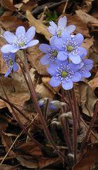 Während die ersten Blütenblätter schon...