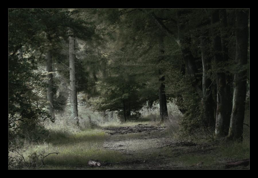 ...während die Hirsche rufen...