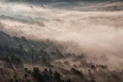 Wälder im Nebel