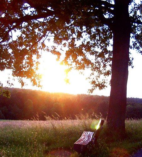 wärmende Abendsonne