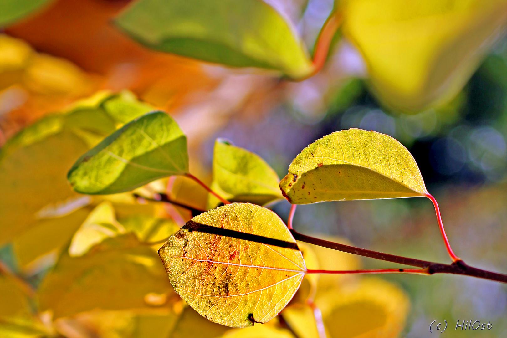 wärmender Herbst