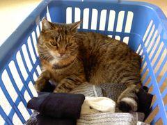 Wäsche fertig !