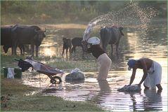 Waesche und Weide Sri Lanka N1
