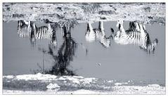 Wässrige Zebrastreifen