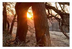 Wahner Heide am frühen Morgen