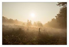 Wahner Heide im Morgennebel
