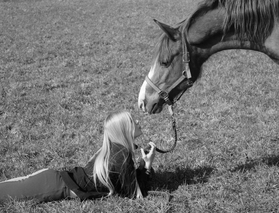 wahre freundschaft foto bild tiere haustiere pferde esel maultiere bilder auf fotocommunity. Black Bedroom Furniture Sets. Home Design Ideas