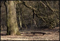... wahrscheinlich unter einem Baum