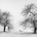 WAITING FOR SPRING [04|BW]