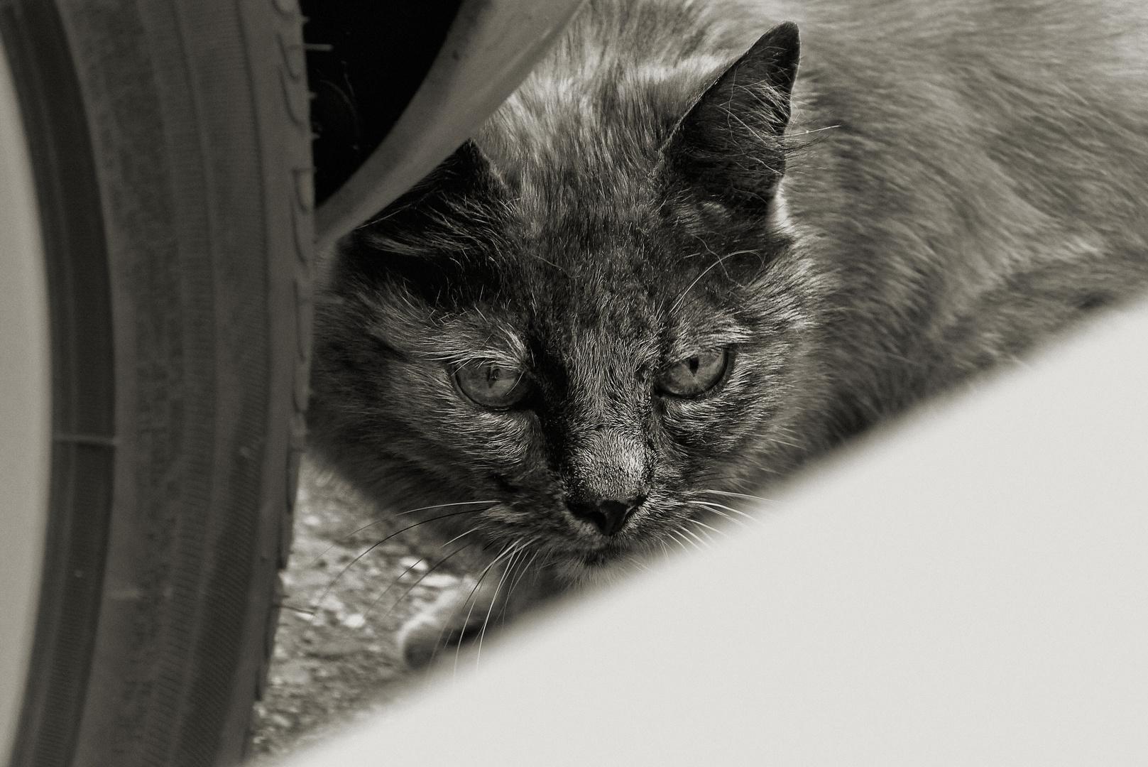 ... waiting in ambush