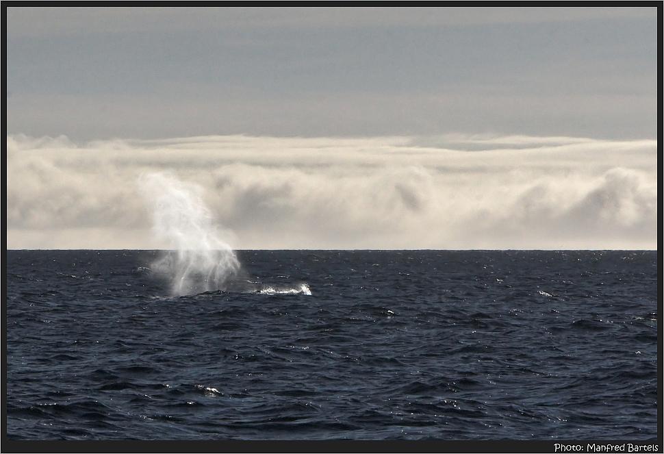 Wal auf 80° Nord.....
