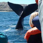Wal in der Bucht von Puerto Pyramides