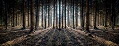 Wald-08
