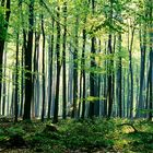 Wald, -1