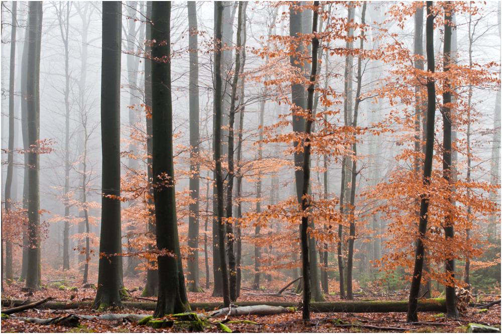 Wald 3