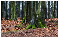 Wald ...
