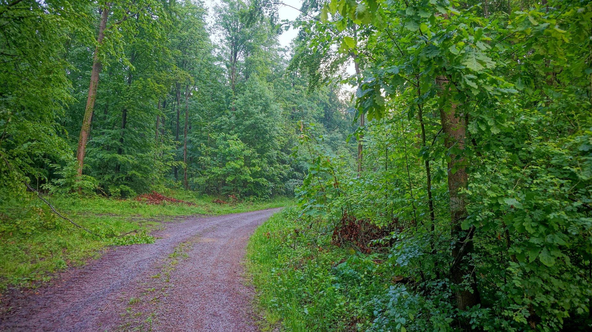 Wald, 6 (bosque, 6)