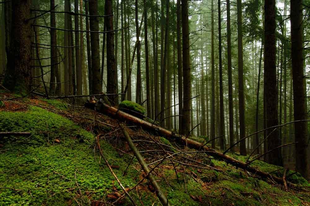 Wald 7