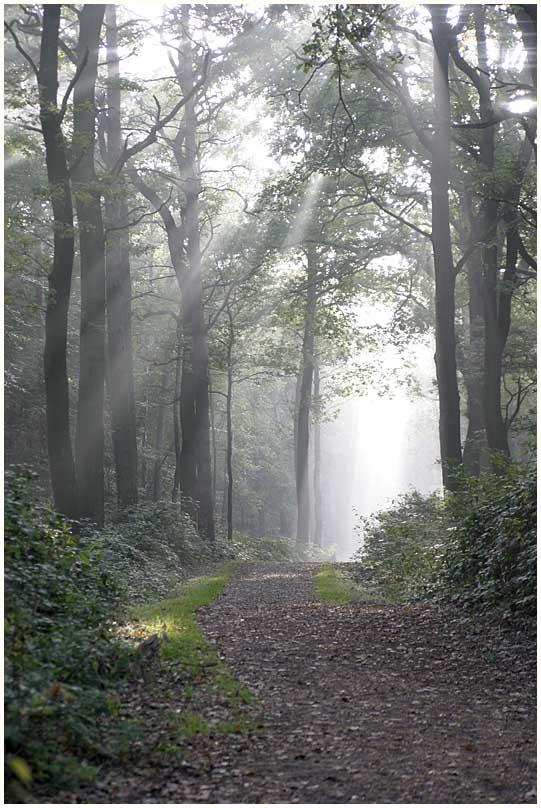 Wald # 8 (8909)