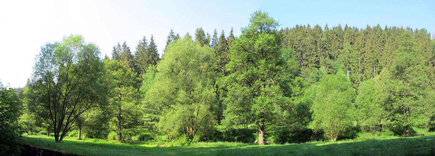-- Wald --