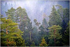 ~~~ Wald ~~~