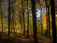 Wald an Allerheiligen