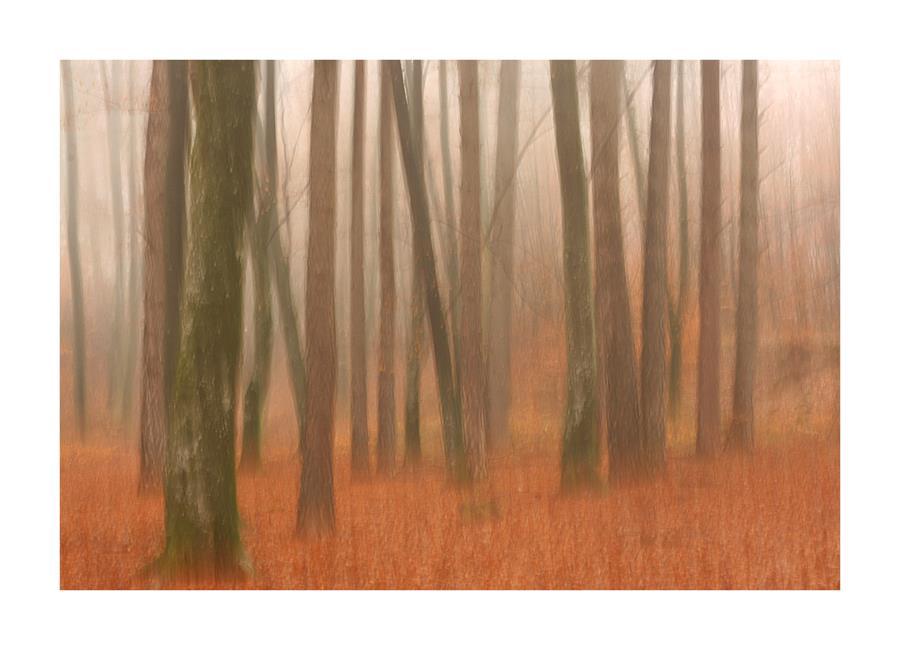 Wald - Aquarell