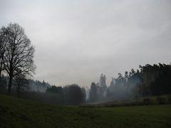 Wald bei Vestenberg in Mittelfranken