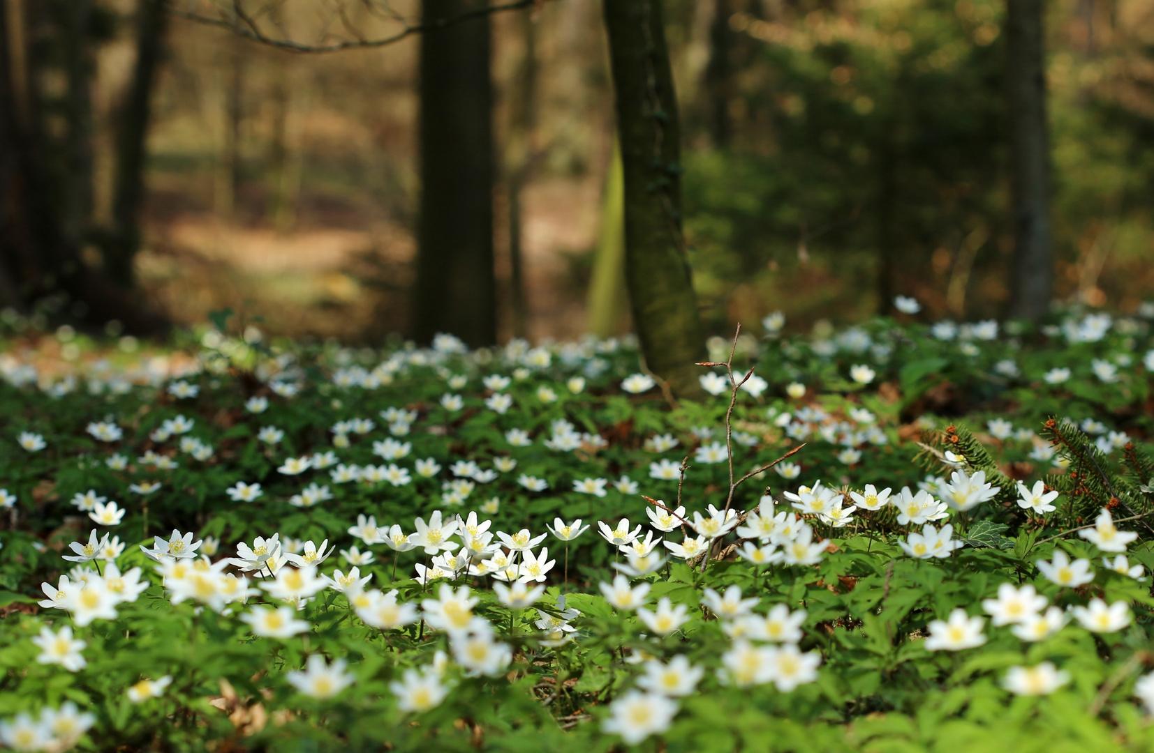 wald boden im fr hling foto bild pflanzen pilze flechten natur bilder auf fotocommunity
