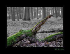 Wald colorkey