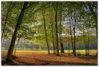 Wald den man vor lauter Bäumen nicht sieht!