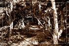 Wald der Elfen...