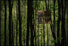 Wald der Erkenntnis