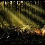 Wald der Mysterien