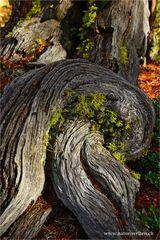 Wald ~ Detail