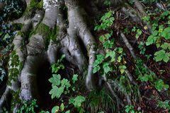 Wald Essenz | Im Photoshop auf 450 kB komprimiert