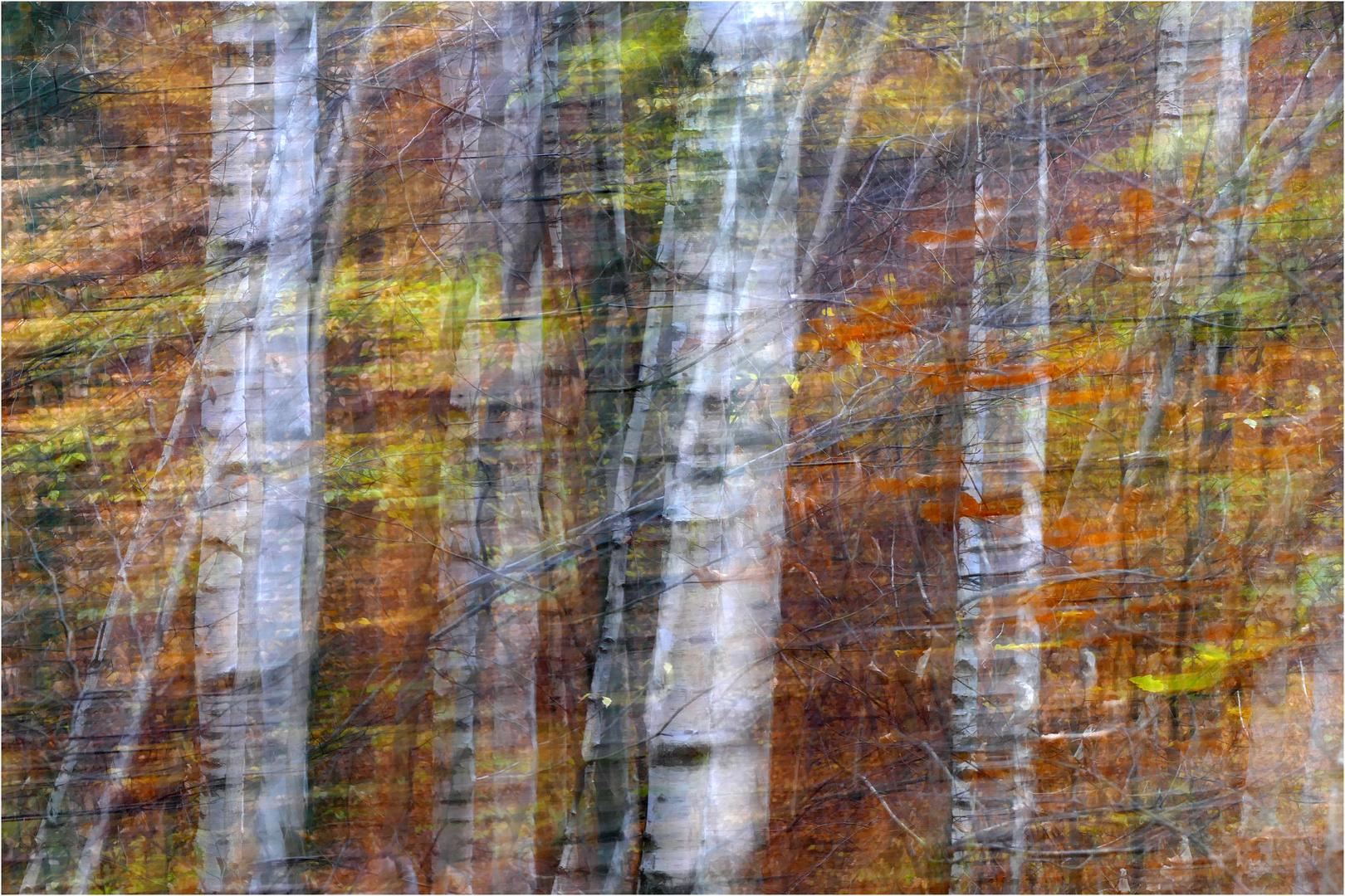 Wald-Farben