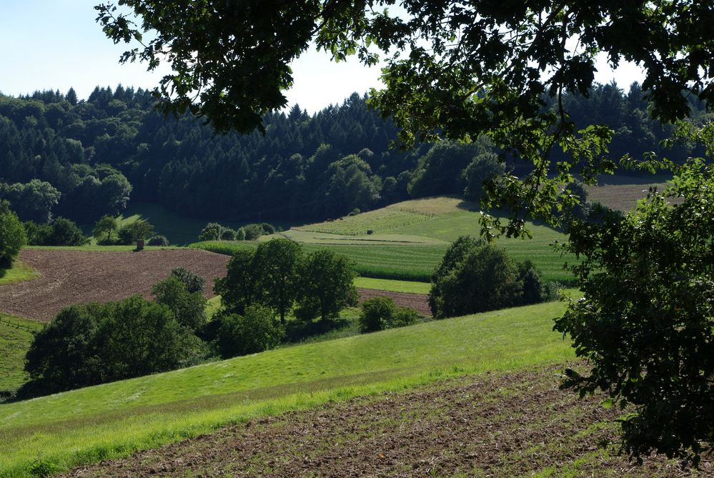 Wald, Feld und Wiese
