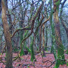 Wald | Gestalten