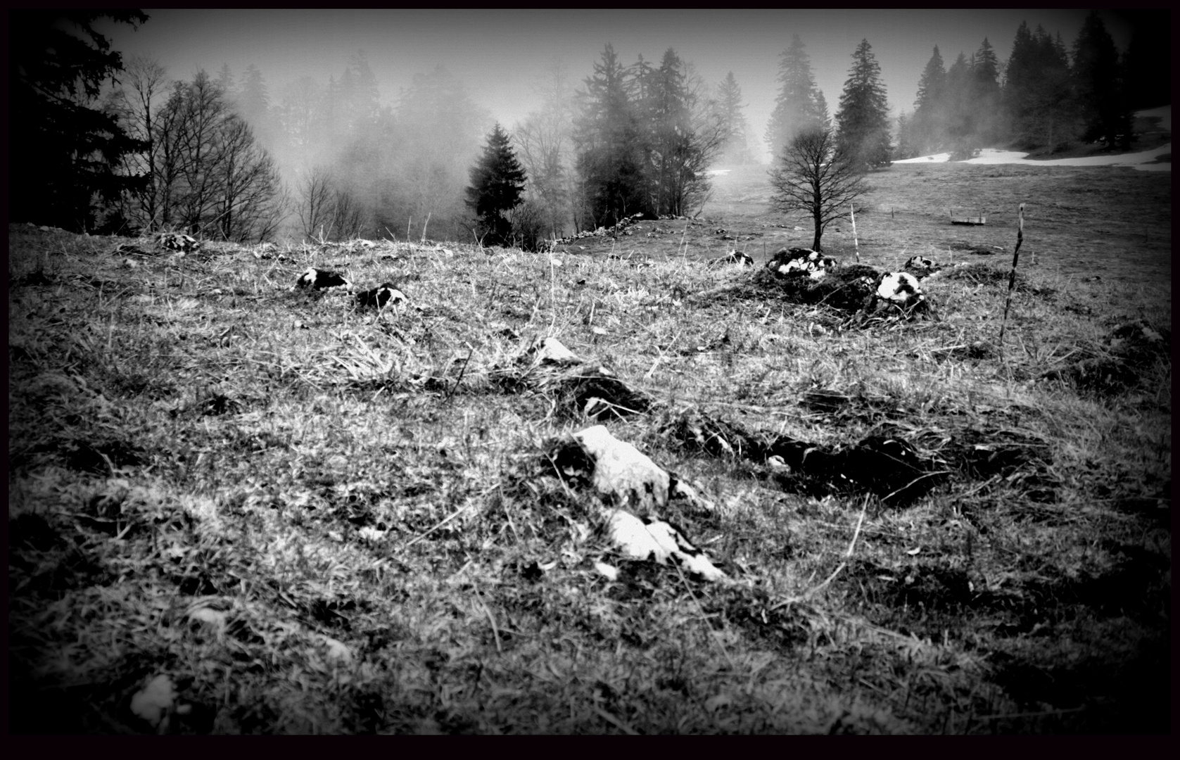 ...Wald halt..